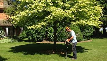 bradford root feeding and aerating - cabling and bracing newmarket - Dave Lund Tree Service and Forestry Co Ltd.