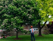 Taking Care of Your Trees by Treating Tree Wounds - Dave Lund Tree Service