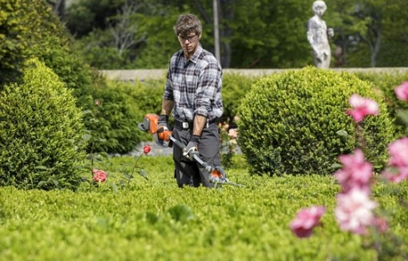 Secrets to Keep Hedges in Top Shape