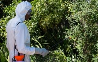 Advantages of Tree Spraying